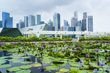 Water Lily Garden by the Artscience Museum with City Skyline Beyond, Marina Bay, Singapore Photographic Print by Fraser Hall