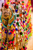 Camel at the Pushkar Camel Fair, Pushkar, Rajasthan, India, Asia Photographic Print by Laura Grier