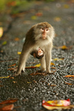 Monkey and Baby, Sacred Monkey Forest, Bali, Indonesia, Southeast Asia, Asia Photographic Print by Laura Grier