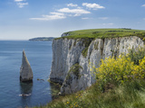 The Chalk Cliffs of Ballard Down with the Pinnacles Stack in Swanage Bay, Near Handfast Point Fotografisk tryk af Roy Rainford