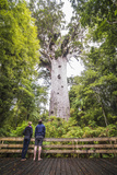 Tourists at Tane Mahuta (Lord of the Forest), the Largest Kauri Tree in New Zealand Photographic Print by Matthew Williams-Ellis
