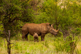 African Rhino and Baby, Kruger National Park, Johannesburg, South Africa, Africa Photographic Print by Laura Grier