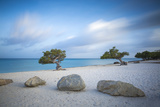 Divi Divi Trees on Eagle Beach, Aruba, Lesser Antilles, Netherlands Antilles, Caribbean Photographic Print by Jane Sweeney