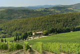 Vineyard and Olive Grove, Pian D'Albola, Radda in Chianti, Siena Province, Tuscany, Italy, Europe Photographic Print by Peter Richardson