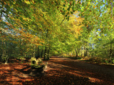 A Path Through Delamere Forest Framed by Trees in their Autumn Colour, Cheshire, England Photographic Print by Garry Ridsdale