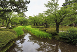 Stream with Lush Greenery and Reflections, Kenrokuen Photographic Print by Eleanor Scriven