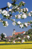 Tree Blossom and Rape Fields in Spring, Stiftskirche Church, Herrenberg, Baden-Wurttemberg, Germany Photographic Print by Markus Lange