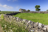 Typical Spring Landscape of Country Lane, Dry Stone Walls, Tree and Barn, May, Litton Photographic Print by Eleanor Scriven