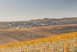 Autumn in the Vineyards of Chablis, Burgundy, France, Europe Photographic Print by Julian Elliott