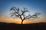 Acacia Tree Near Dune 45 in the Namib Desert at Sunset, Sossusvlei, Namin-Naukluft Park Photographic Print by Alex Treadway