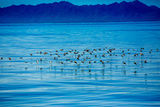 Birds, Whale Watching, Magdalena Bay, Mexico, North America Photographic Print by Laura Grier