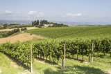 Vineyards Near to Todi, Umbria, Italy, Europe Photographic Print by Julian Elliott