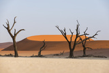 Dead Acacia Trees Silhouetted Against Sand Dunes at Deadvlei, Namib-Naukluft Park, Namibia, Africa Photographic Print by Alex Treadway