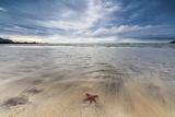 Sea Star in the Clear Water of the Fine Sandy Beach, Skagsanden, Ramberg Reprodukcja zdjęcia autor Roberto Moiola