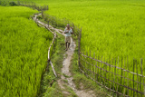 A Pathway Through the Rice Paddies in the Chittangong Hill Tracts, Bangladesh, Asia Photographic Print by Alex Treadway