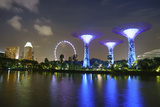 Supertree Grove in the Gardens by the Bay, a Futuristic Botanical Gardens and Park Photographic Print by Fraser Hall