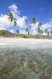 Sandy Beach Surrounded by Palm Trees and the Caribbean Sea, Morris Bay, Antigua and Barbudas Photographic Print by Roberto Moiola