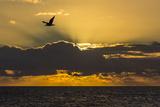 Sunrise Near Punta Colorado, San Jose Island, Baja California Sur, Mexico, North America Photographic Print by Michael Nolan