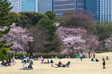 People Relaxing and Picnicking Amongst Beautiful Cherry Blossom, Tokyo Imperial Palace East Gardens Photographic Print by Martin Child
