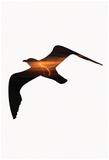 Lightening Bird Prints