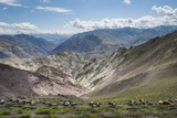 Pack Horses in the Ladakh Region, Himalayas, India, Asia Lámina fotográfica por Alex Treadway