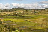 Paddy Rice Field Landscape in the Madagascar Central Highlands Near Ambohimahasoa Photographic Print by Matthew Williams-Ellis