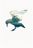 Cloud Gull Posters