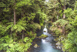 Hatea River Landscape at the Whangarei Falls, a Waterfall in the Northlands Region of North Island Photographic Print by Matthew Williams-Ellis