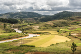 Rice Paddy Field Scenery Near Antananarivo, Antananarivo Province, Eastern Madagascar, Africa Photographic Print by Matthew Williams-Ellis