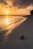 Coconut on a Tropical Beach at Sunset, Rarotonga Island, Cook Islands, South Pacific, Pacific Photographic Print by Matthew Williams-Ellis