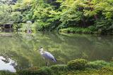Stork at Hisagoike Pond in Summer, Kenrokuen, One of Japan's Three Most Beautiful Landscape Gardens Papier Photo par Eleanor Scriven