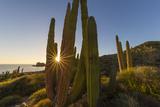 Cardon Cactus (Pachycereus Pringlei) at Sunset on Isla Santa Catalina, Baja California Sur, Mexico Photographic Print by Michael Nolan
