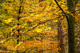 Trees in Autumn, Gragg Vale, Calder Valley, Yorkshire, England, United Kingdom, Europe Photographic Print by Bill Ward