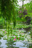 Weeping Willow and Waterlilies, Monet's Garden, Giverny, Normandy, France, Europe Photographic Print by James Strachan