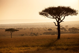Kenya, Mara North Conservancy. Mara North Landscape at Dawn. Fotodruck von Niels Van Gijn