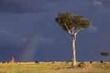 Kenya, Masai Mara Photographic Print by Nigel Pavitt