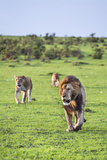 Kenya, Narok County Photographic Print by Nigel Pavitt
