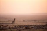 Kenya, Mara North Conservancy. a Young Giraffe with Never Ending Plains of Maasai Mara Behind Fotodruck von Niels Van Gijn