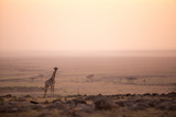 Kenya, Mara North Conservancy. a Young Giraffe with Never Ending Plains of Maasai Mara Behind Photographic Print by Niels Van Gijn