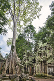 Cambodia, Ta Prohm, Siem Reap Province. the Ruins of the Buddhist Temple of Ta Prohm Photographic Print by Nigel Pavitt