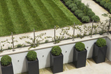 Topiary Balls in Powder-Coated Steel Containers Along the Retaining Wall Photo by Pedro Silmon