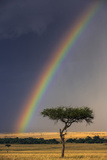 Kenya, Masai Mara, Narok County. a Brilliant Rainbow in Masai Mara National Reserve. Photographic Print by Nigel Pavitt
