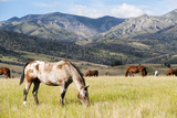 Horses Grazing at Bitterroot Ranch, Dubois, Wyoming, Usa Photographic Print by John Warburton-lee
