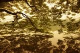 Vietnam, Ha Noi, Hoan Kiem Lake. a Huge Tree Hangs Low over the Still Waters of Hoan Kiem Lake. Fotodruck von Niels Van Gijn