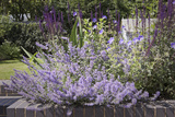 Salvia and Other Blue and Purple Flowers in Raised Bed in Garden, London Photo by Pedro Silmon