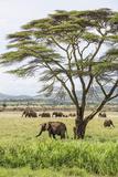 Kenya, Meru County Photographic Print by Nigel Pavitt