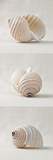 Seashell Trio III Giclee Print by Assaf Frank