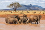 Kenya, Taita-Taveta County Fotografie-Druck von Nigel Pavitt