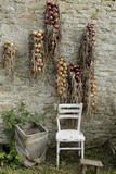 Bunches of Onions Drying Out on Brick Wall with Chair Photo by Christina Wilson