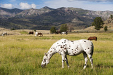 Horses Grazing at Bitterroot Ranch, Dubois, Wyoming, Usa Photographic Print by John Warburton-lee